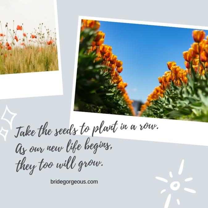 #01 Plant Fun Fact